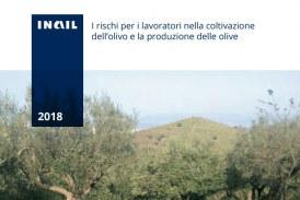 I rischi per i lavoratori nella coltivazione dell'olivo e la produzione delle olive